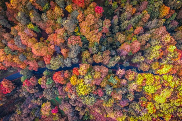 Autumn in Lithuania forest