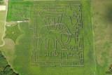 Corn maze in Kurozweki