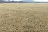 Pronghorn Antelope, Chino Valley Arizona