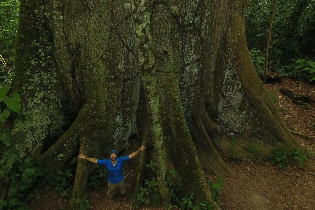 Kapok, Posada Amazonas, Tambopata National Reserve, Puerto Maldonado, Peru