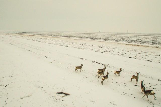 Chasing Bambi