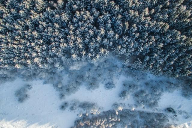 Winter Forst