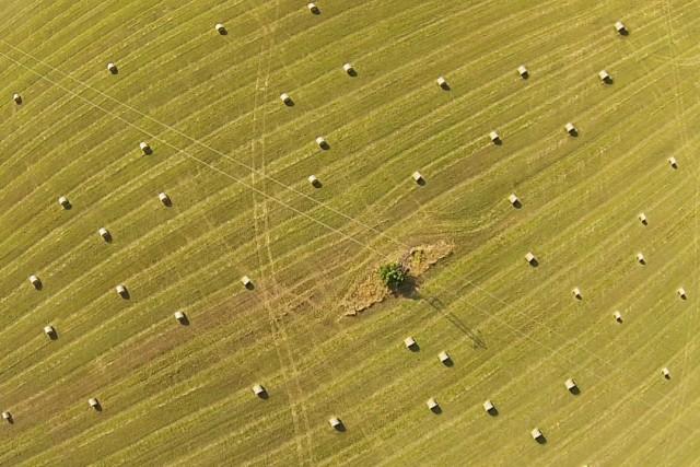 Wheat fields near Ploiesti , Romania