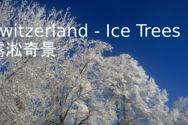 Switzerland – Ice Trees – 霧淞奇景