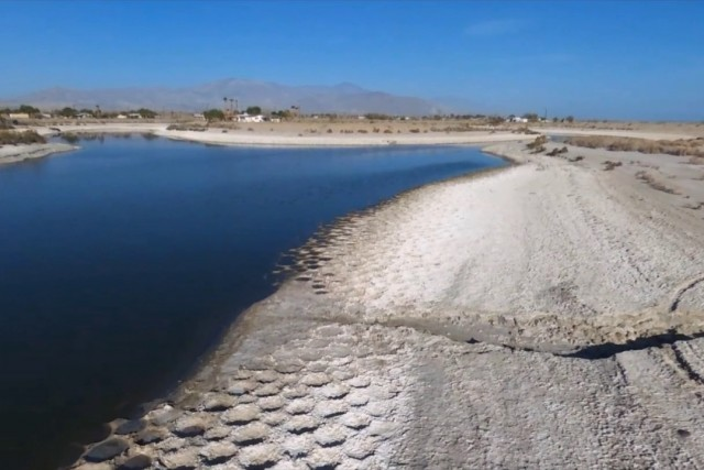 Tilapia Beds of the Salton Sea