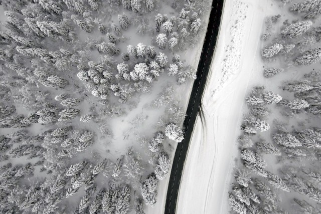 Road in the Alpine Forest