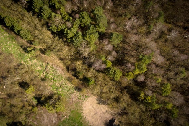 La cime des arbres