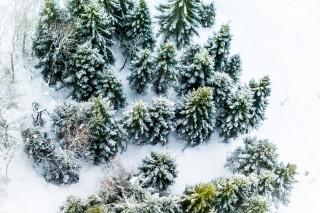 Snow at trees