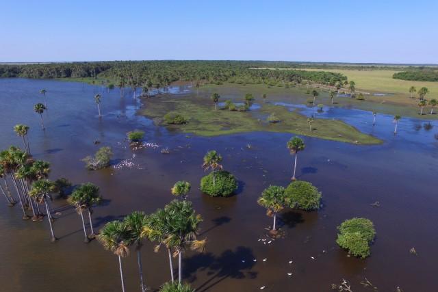 Morichales; Llanos Orientales – Colombia