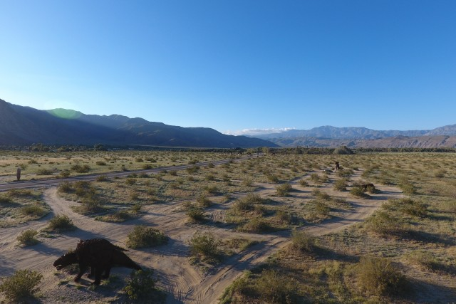 Wildflowers in and around Borrego Springs, CA