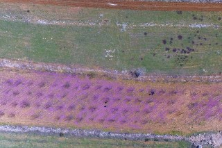 Spring in Bekaa valley in Lebanon