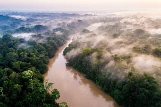 The Amazonian