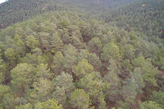 Bosc i porcessionària