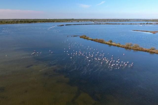 Fenicotteri rosa nel Delta del Po