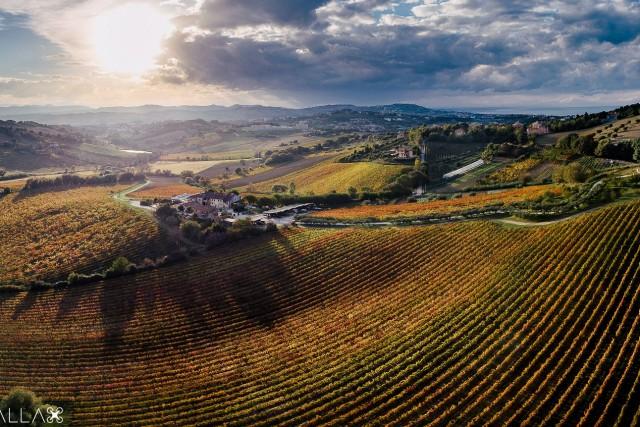 winescape