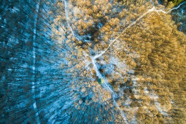 Woods in Mátra December