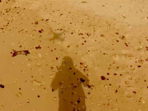 Drone's shadowShadow on the beach