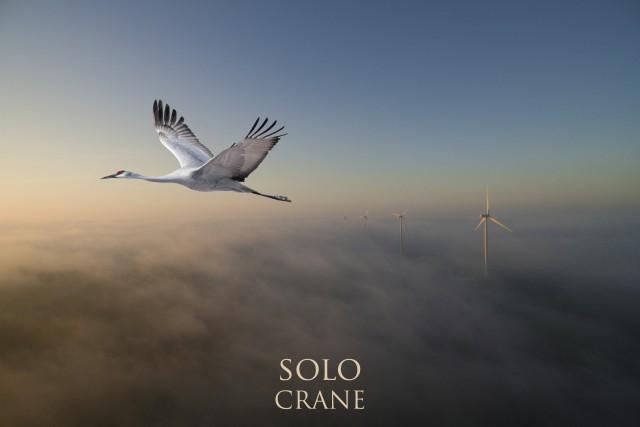 Solo crane