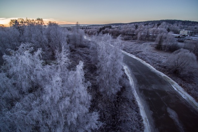 Frozen trees and City
