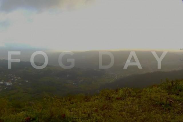 Fog Day – #Weareparrot