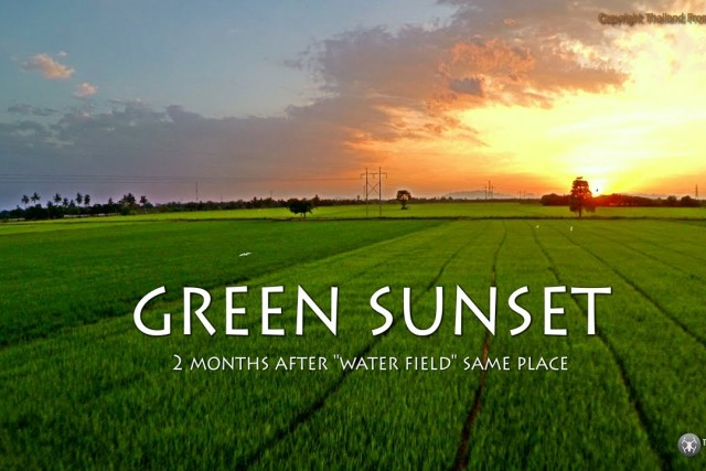 green sunset on tha muang distric rice farm in thailand 4k