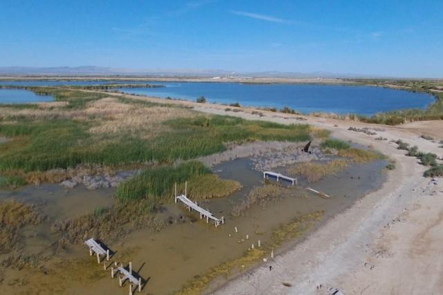 Salton Sea Wetlands