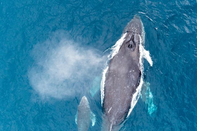 Whale at Kerama Okinawa