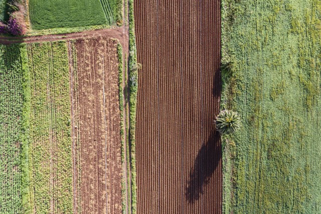 Linear agriculture
