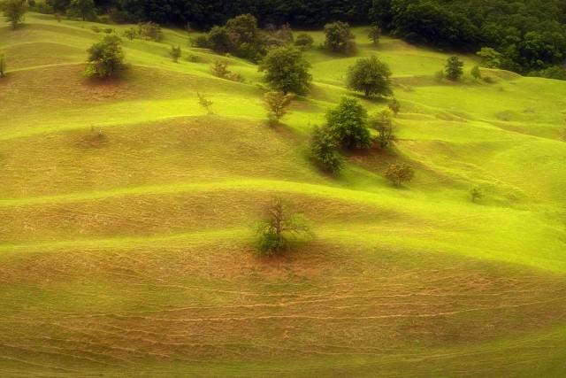 Evergreen Terrace