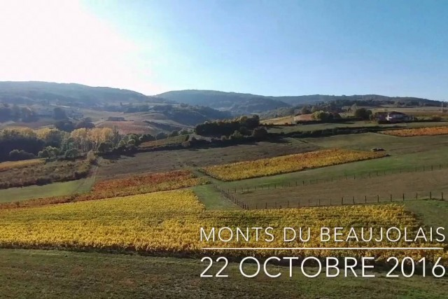 Beaujolais hills in automn