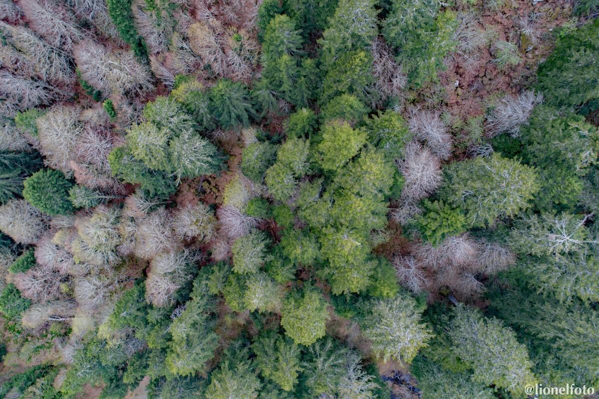 Forêt de conifères et de hêtres