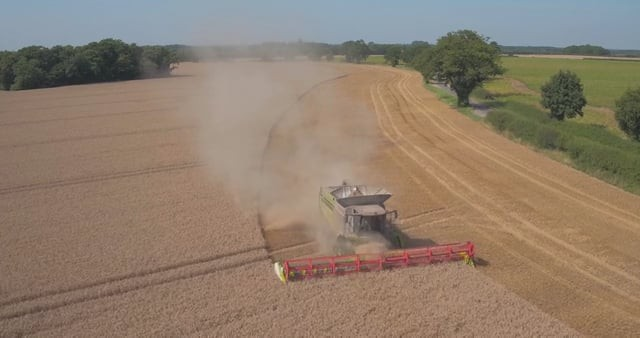 Norfolk wheat harvest and a CLAAS combine harvester at work.