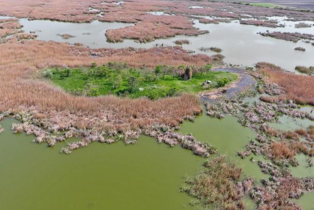 Green island on lake