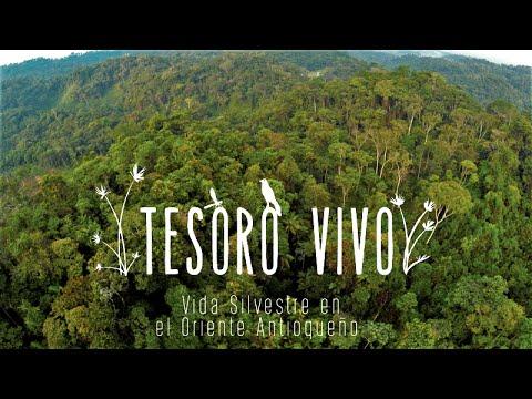 TESORO VIVO – Vida silvestre en el Oriente Antioqueño (Documental)