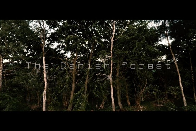 The The Danish forest