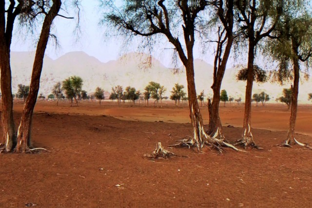 Trees of Maleiha Desert