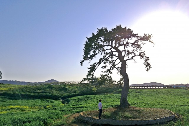 Hello, big tree :)