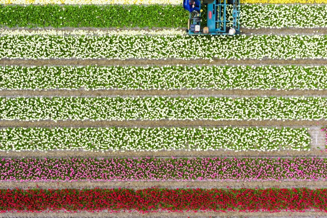 Rainbow harvest