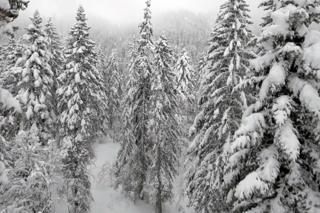 Winter Snowfall in the French Jura Mountains