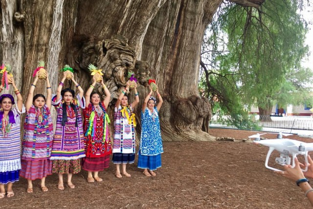 2000 year old tree and folklore backstage