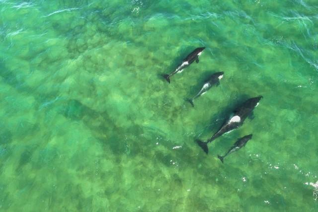 Orcas Family