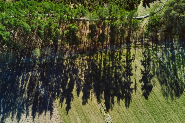 Shadows of the trees