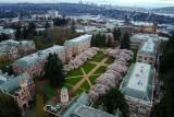 University of Washington Cherry Blossoms