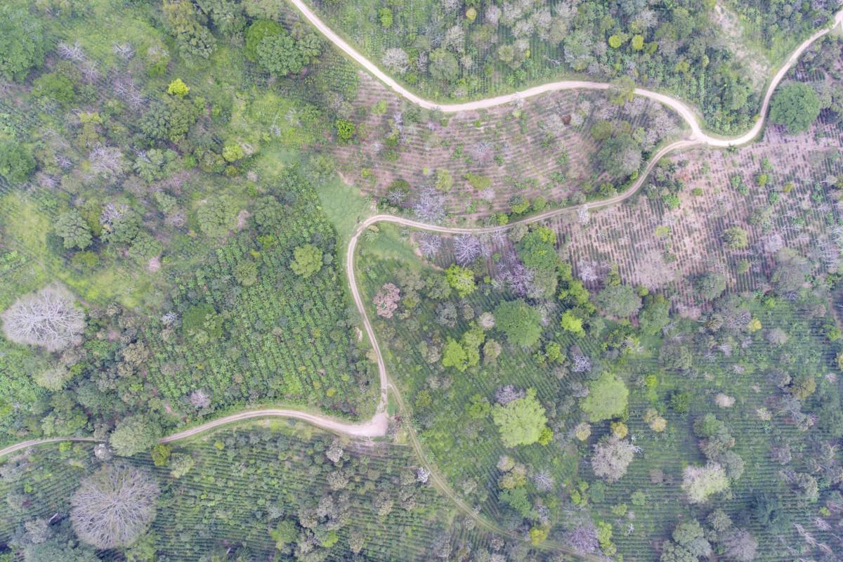 Coffee fields, Matagalpa, Nicaragua