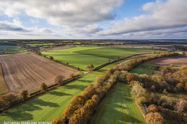 Woodland and Farmland in north Norfolk