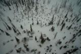 Life in Tundra