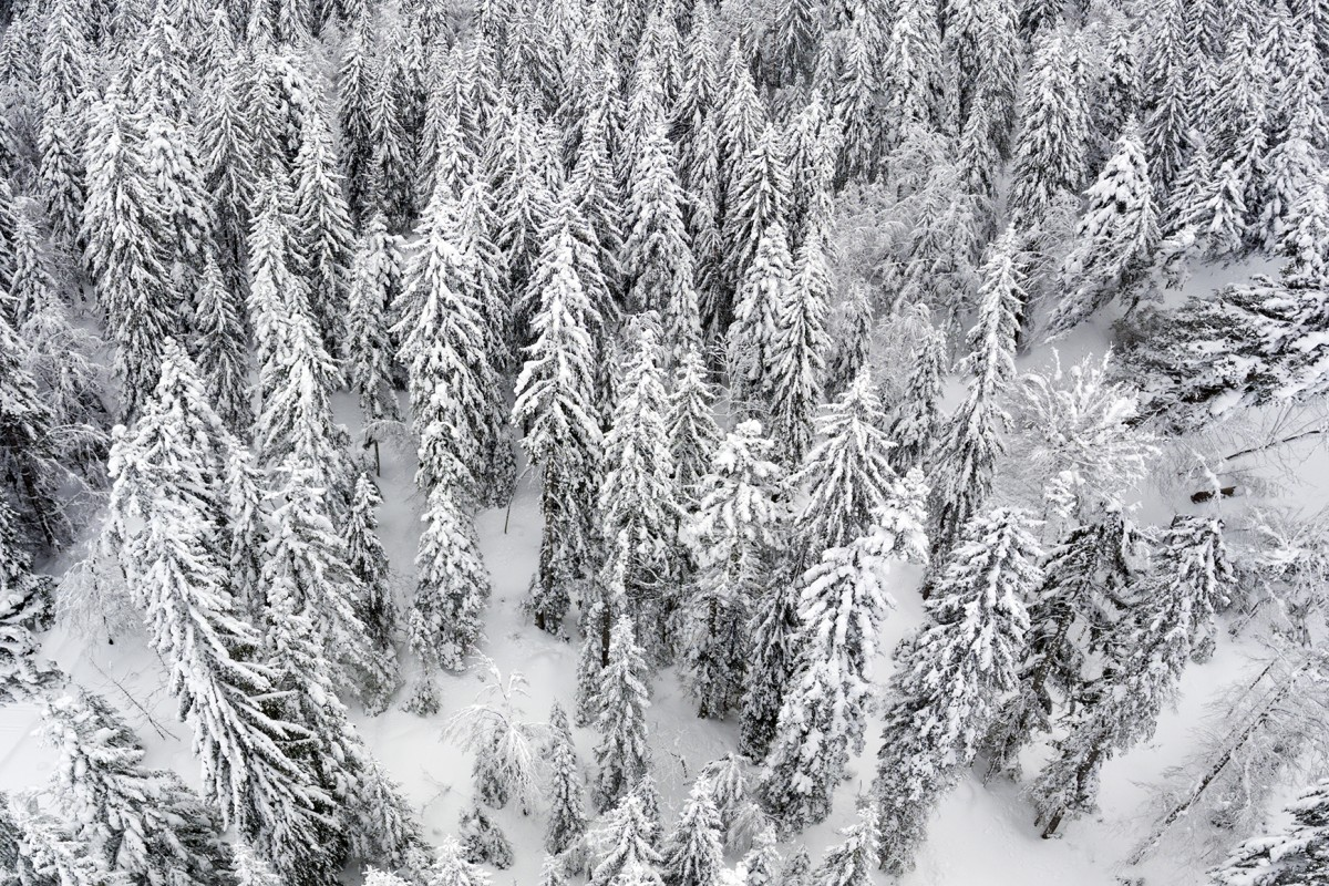 Above the trees after a winter snowfall