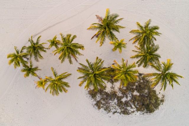 Crandon Park Palms