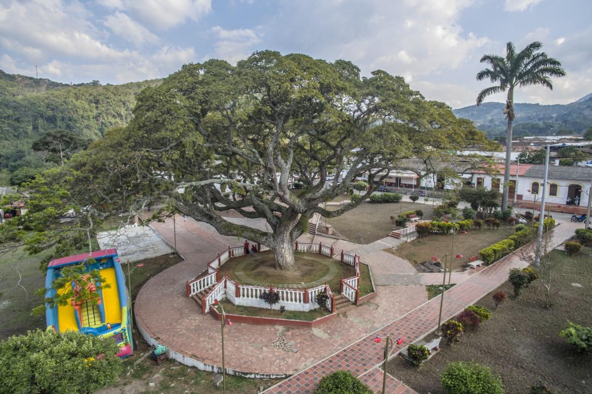 The Samán tree