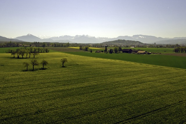 Spring Fields and Mont blanc mountains in the background